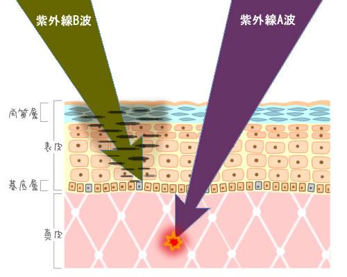 紫外線B波と紫外線B波